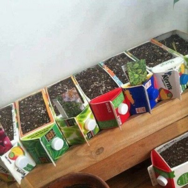 Upcycled Juice Carton Seed Pods