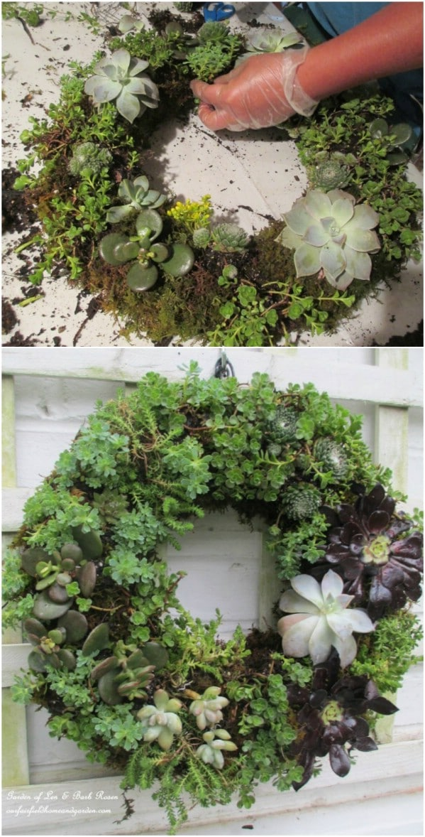 Succulent Wreath
