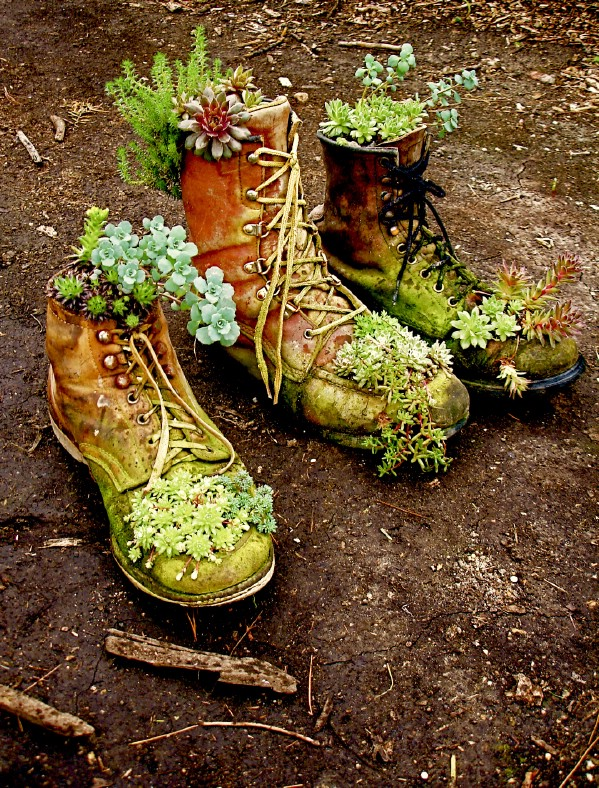 Boot Or Shoe Succulent Planters