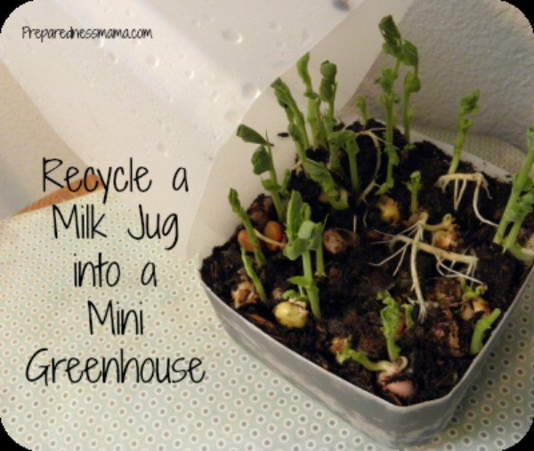 Upcycled Plastic Milk Jugs Into Seed Starters