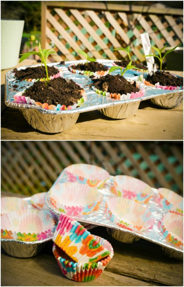 Repurposed Muffin Tin Seed Pots