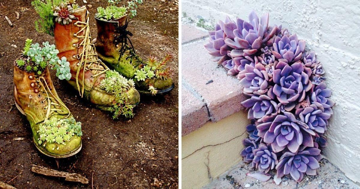 30 Captivating Backyard Succulent Gardens You Can Easily Diy Diy Crafts