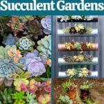 Backyard succulent gardens collage