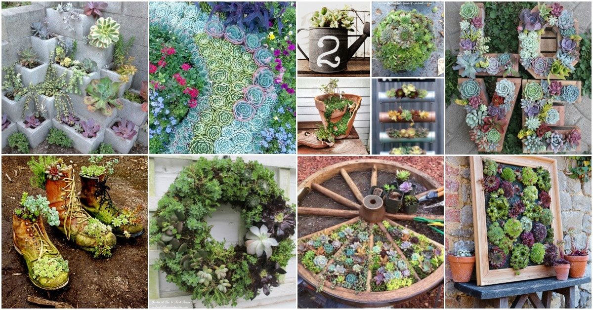 30 Captivating Backyard Succulent Gardens You Can Easily Diy Diy