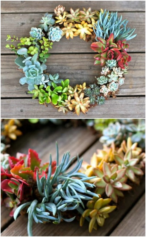 Inexpensive And Easy Living Succulent Wreath