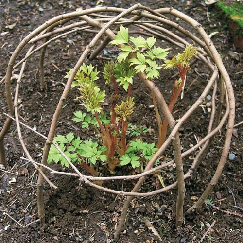 Garden Plant Support