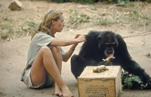 Jane Goodall Costume