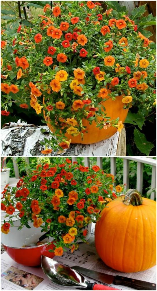 Real Pumpkin Planters