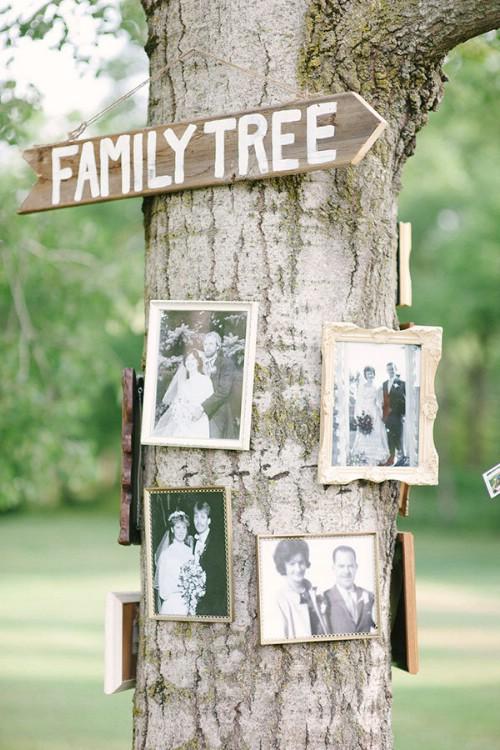 Decorative Frames On Tree