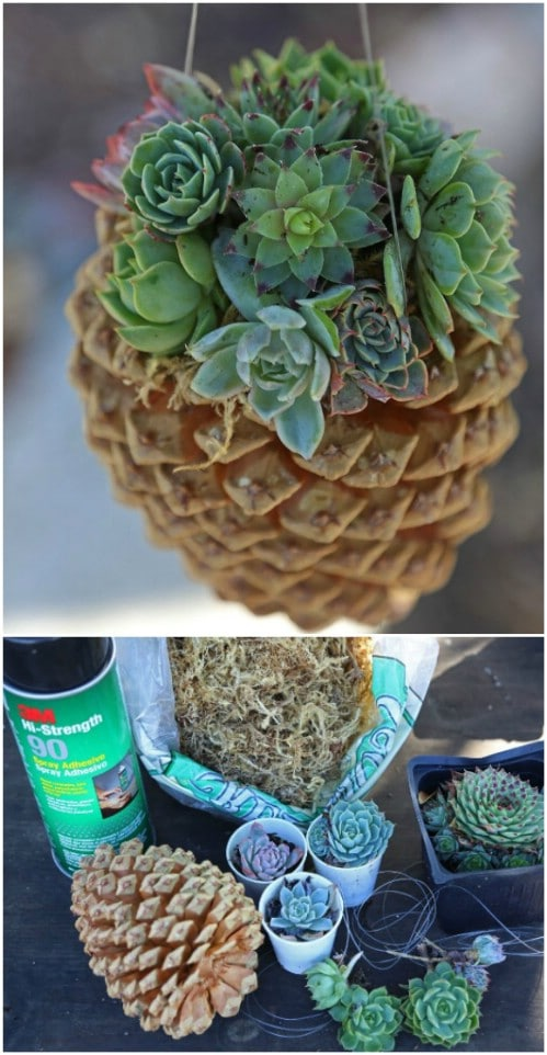 DIY Pinecone Succulent Planters