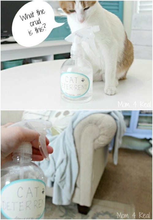 DIY Cat Deterrent Spray
