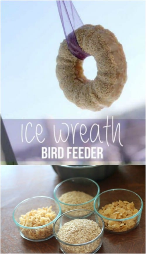 Edible Ice Bird Feeder