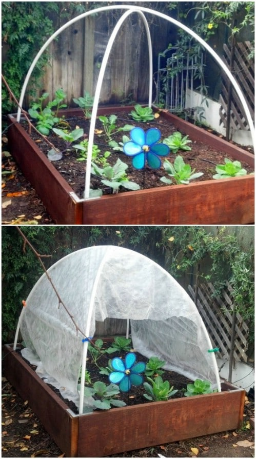 Super Cheap Hoop Style Greenhouse