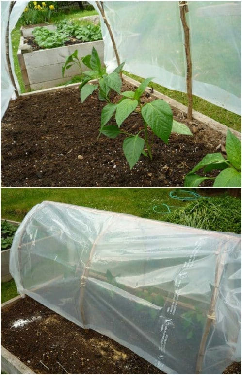 DIY Instant Cloche Greenhouse