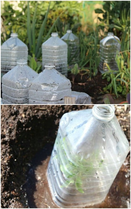 Mini Bottle Greenhouse