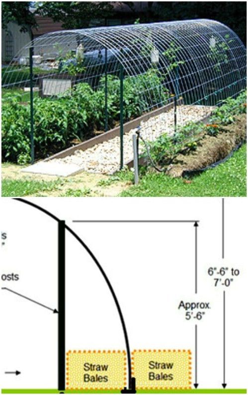 Repurposed Cattle Panel Arched Trellis Greenhouse