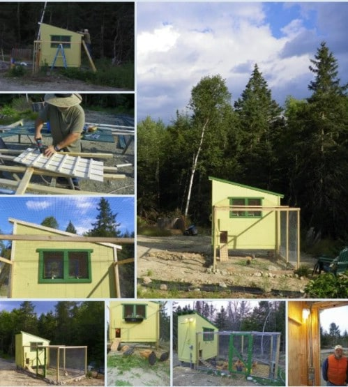 Multiple Roost Chicken Coop