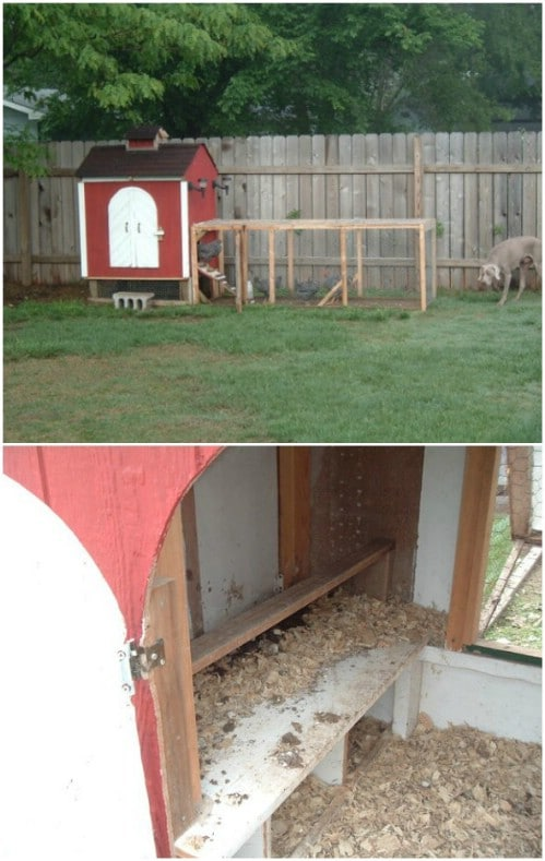 Quick And Simple Backyard Chicken Coop