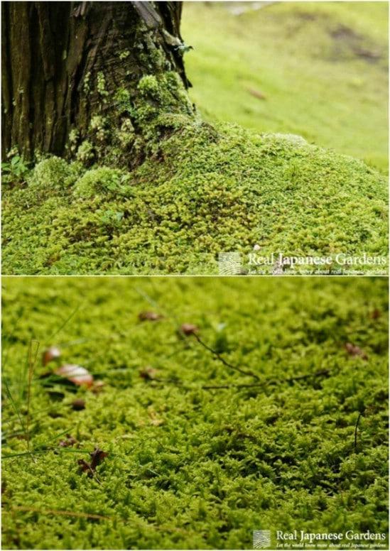 Add Some Moss