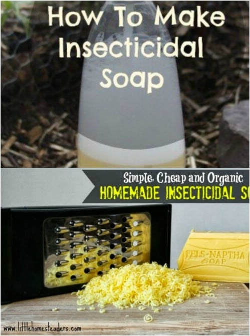 DIY Insecticidal Soap