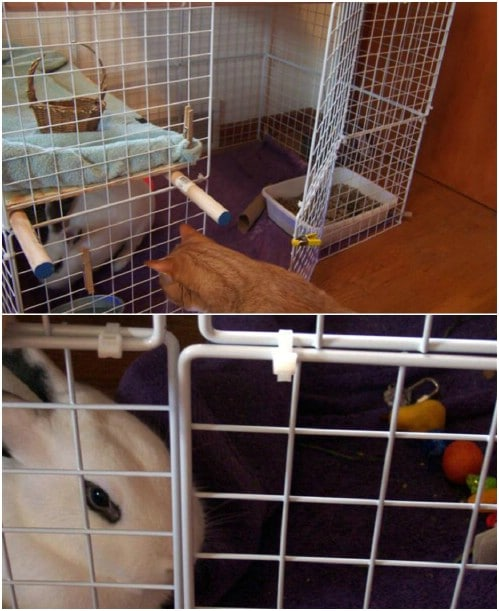 Upcycled Wire Storage Cube Bunny Condo