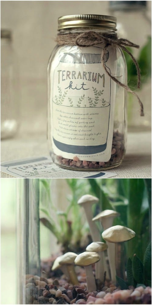 DIY Terrarium Kit For Gardeners