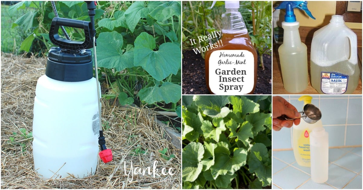 10 Homemade Insecticides That Keep Your Garden Pest Free ...