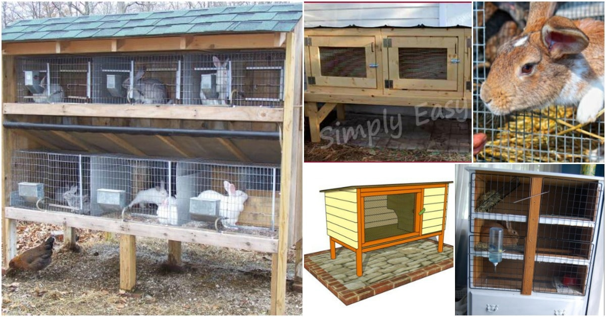 10 Free DIY Rabbit Hutch Plans That Make Raising Bunnies ... Rabbit House Plans Perfect on rabbit cages, rabbit blueprints, rabbit glass, rabbit couple, snare trap plans, rabbit hutch, rabbit making a home, rabbit playground, rabbit beauty, rabbit shit, rabbit housing, rabbit pens, rabbit fart, rabbit runs product, rabbit engineering, rabbit houses outdoor, rabbit houses and sleeping quarters, rabbit runs and houses, rabbit condo,