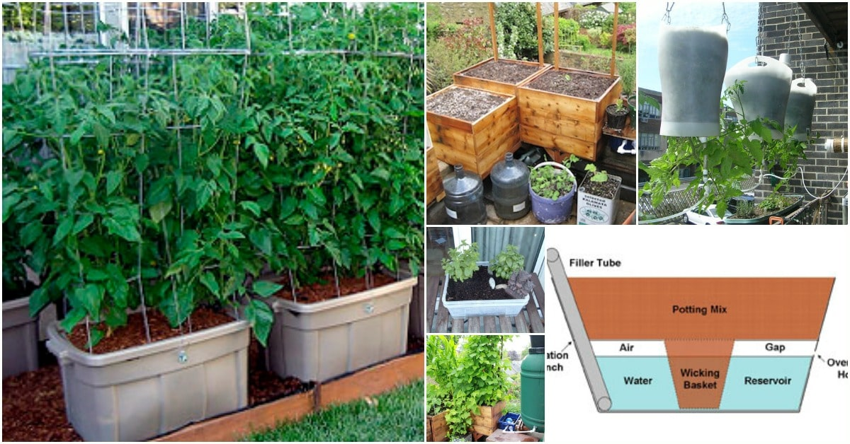 15 DIY Self Watering Planters That Make Container Gardening Easy
