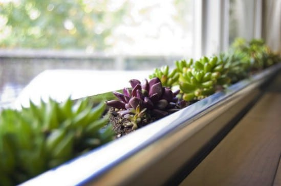 DIY Succulent Window Box