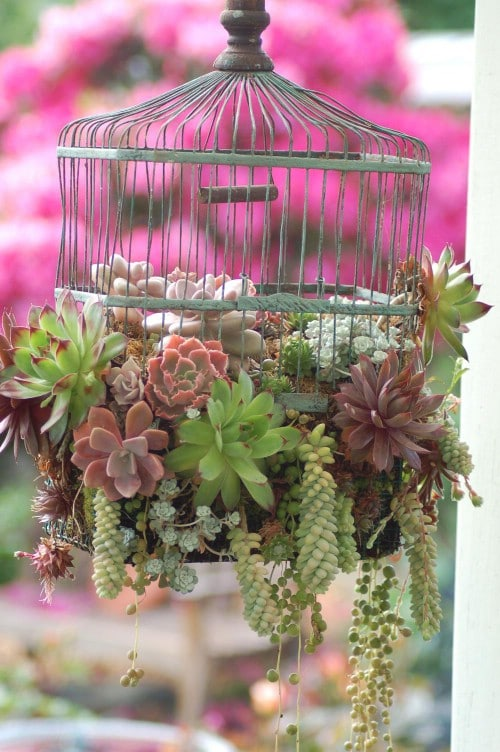 Upcycled Bird Cage Planter