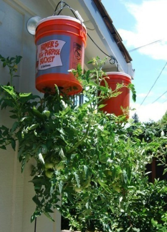 DIY Upside Down Tomato Planter