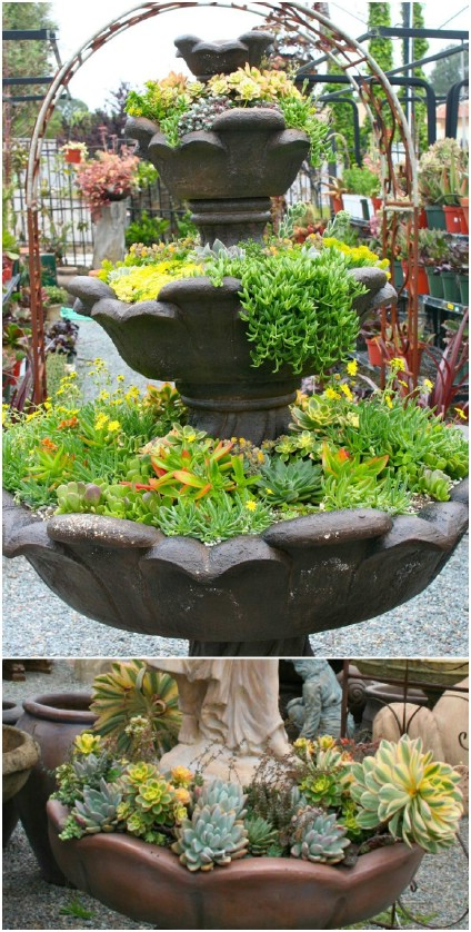 DIY Succulent Water Fountain