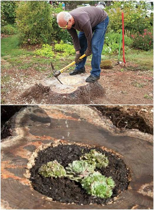 Repurposed Tree Stump Planters