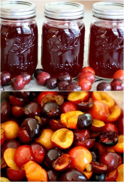 Tasty Homemade Wild Plum Jelly