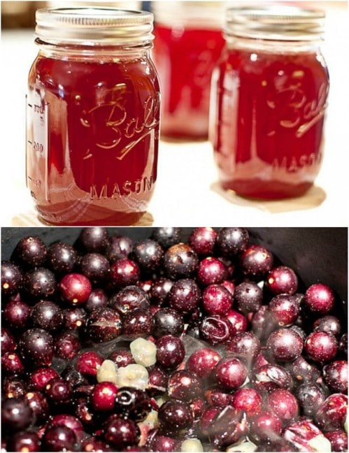 Easy Homemade Muscadine Jelly