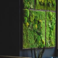 Real Preserved Moss Wall Art Green Wall Collage