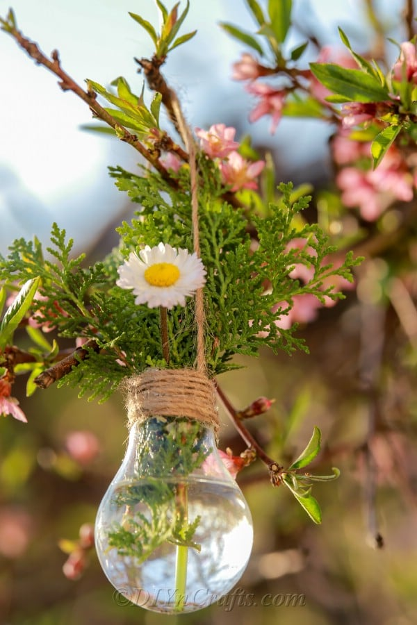 Hanging lightbulb planter with flowers