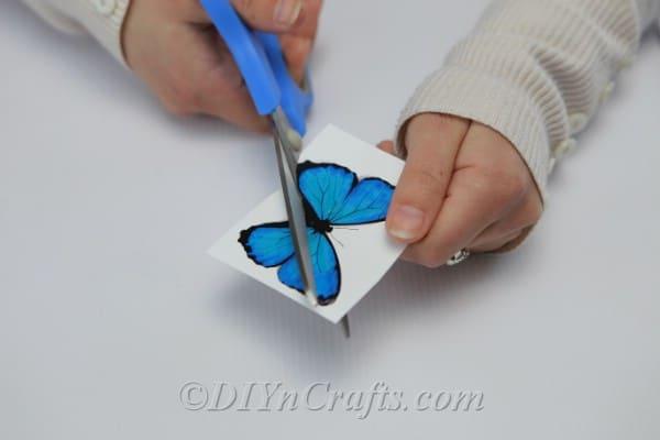 Cut out blue paper butterflies