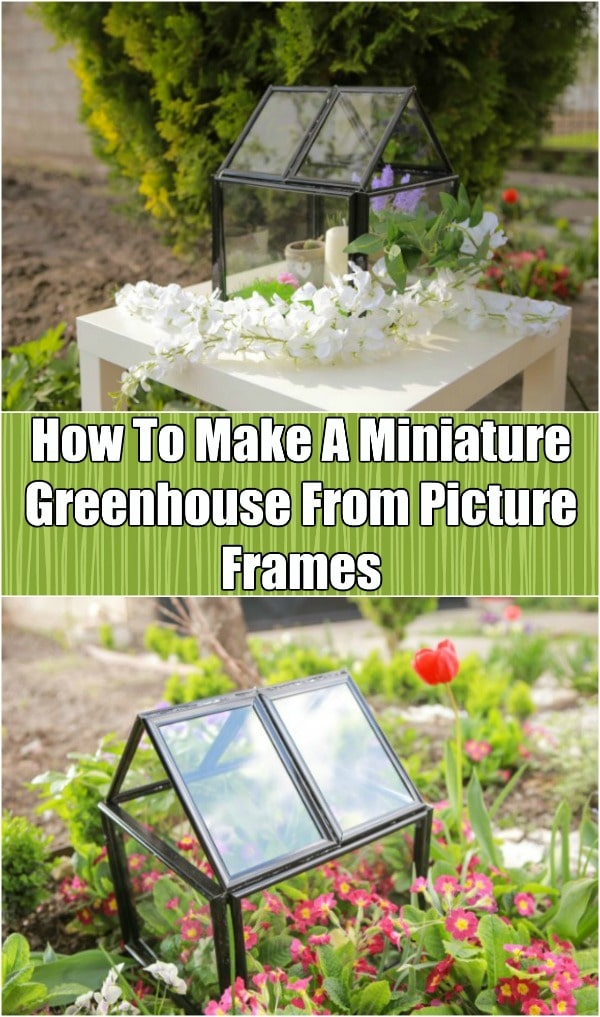 How To Make A Miniature Greenhouse From Picture Frames - Build your own mini greenhouse from inexpensive picture frames. This step-by-step video tutorial shows you how to turn those frames into the perfect terrarium for your home or yard.