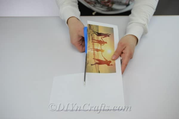 Trimming the edges from a photograph