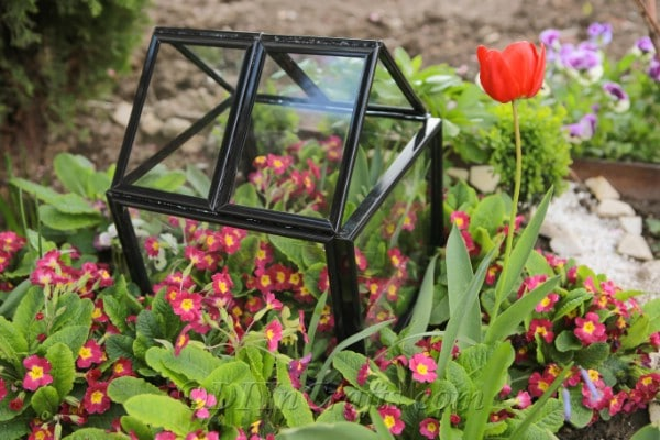 DIY greenhouse made from picture frames