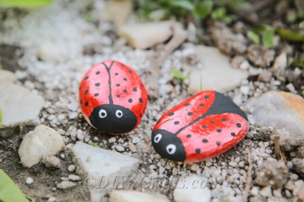 Two ladybug rocks in the gravel