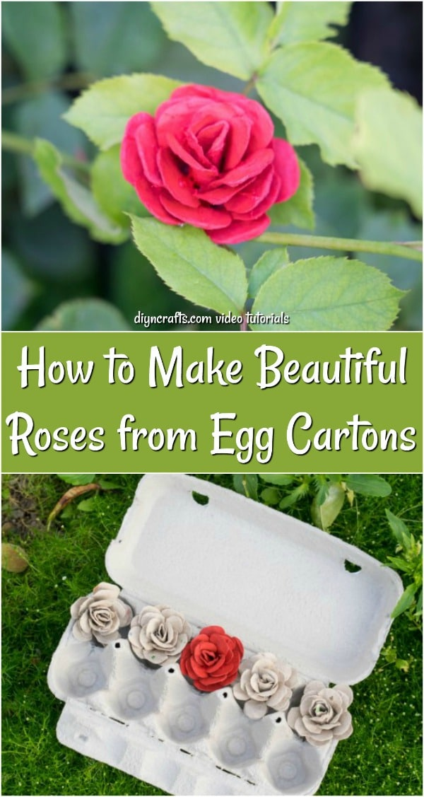 Egg carton roses collage for Pinterest.