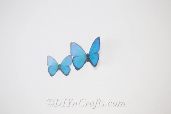 Butterfly stencils in two sizes have been cut out.