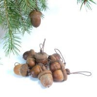 Set of 10 real large acorn pendant ornaments
