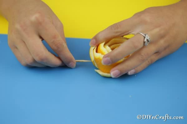 Pinning the bottom of the orange with a toothpick