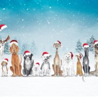 The Gang - Pack of 10 Christmas Cards