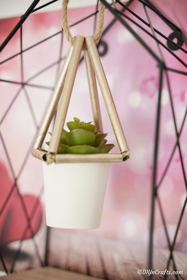 Succulents planter hanging inside wire cage