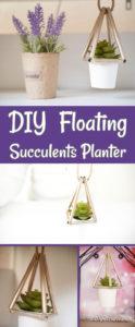 Succulents planter collage image